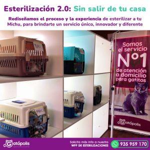 esterilizaciones_gatopolis